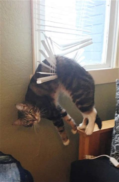 Funny Animals Who Don't Seem To Mind That They're Stuck